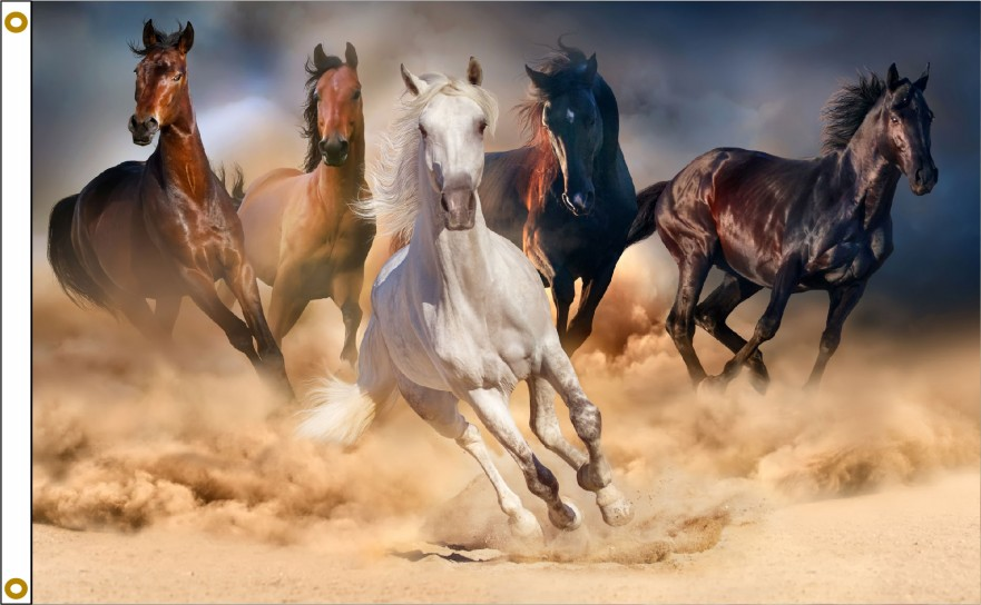 HORSES 649